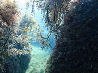Подводный мир Судака_10