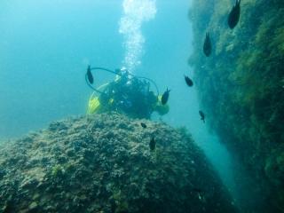 Подводный мир Судака_2