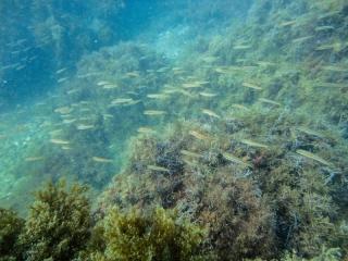 Подводный мир Судака_6