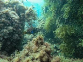 Подводный мир Судака_7