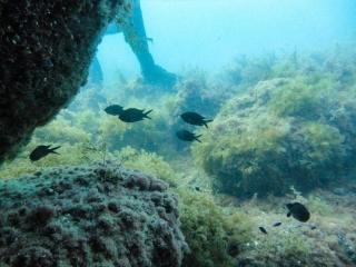 Подводный мир Судака_8